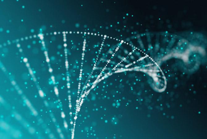 YAEGAKI Biotechnology Research theme: ingredients to enhance lipid metabolism