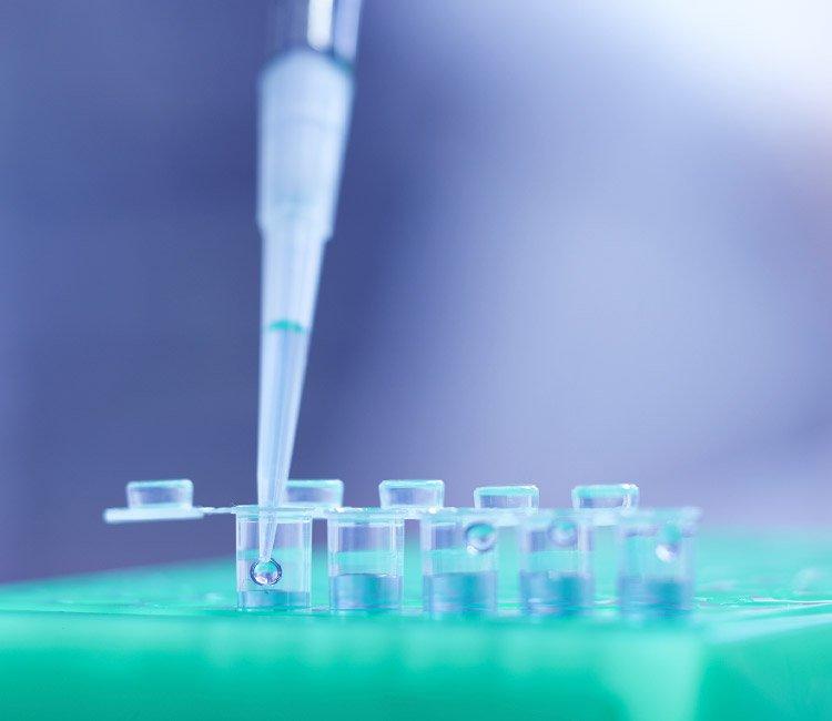 YAEGAKI Biotechnology New Fields