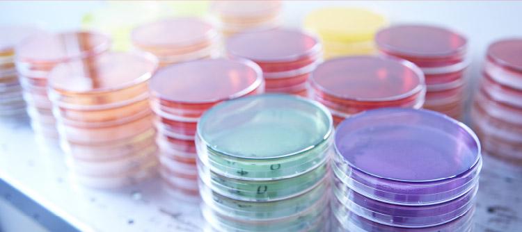 YAEGAKI Biotechnology Recruitment Information